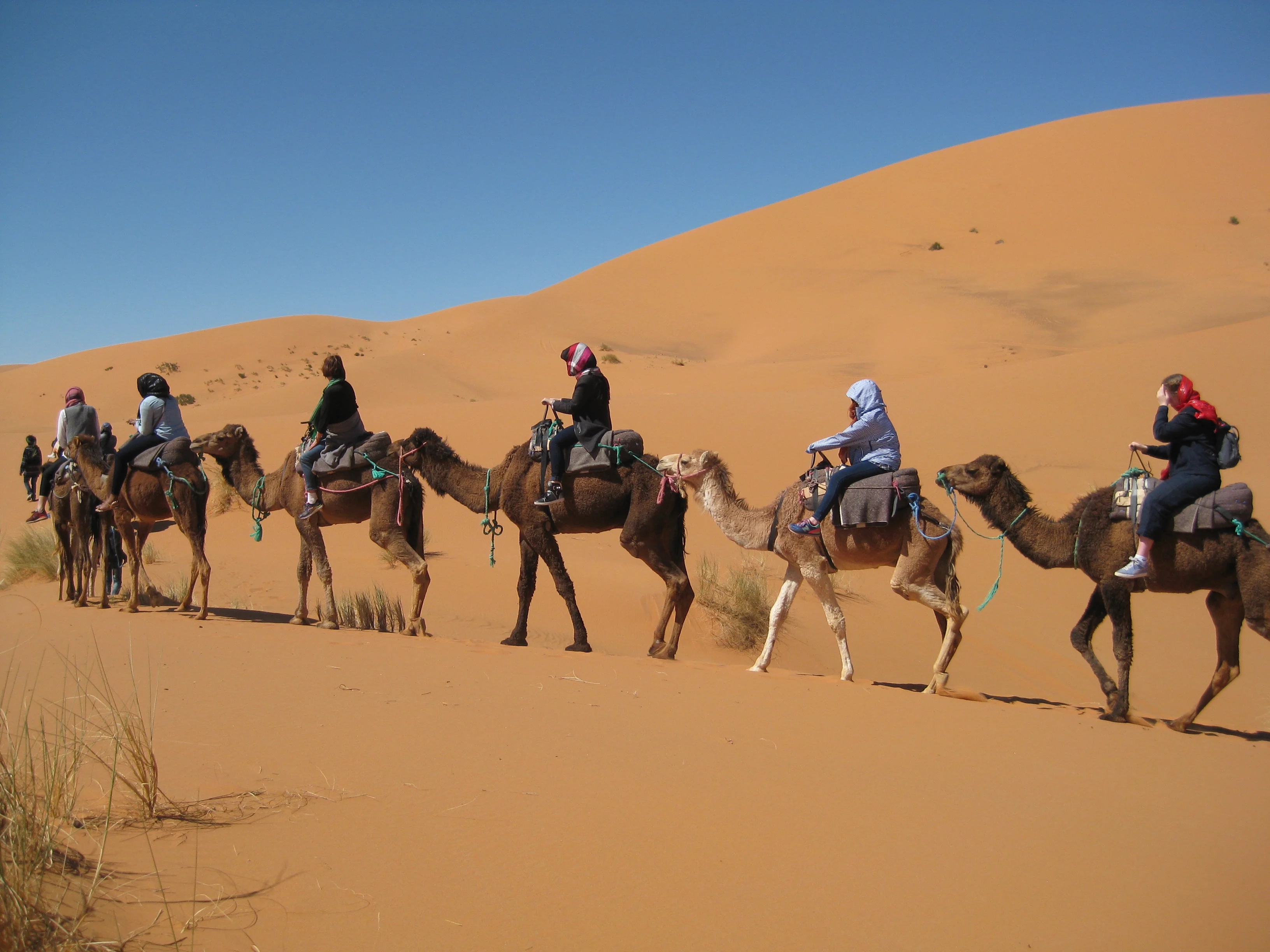 Camel back ride in Morocco on a student tour