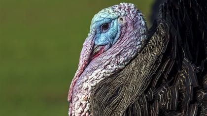 JS_blog_turkey
