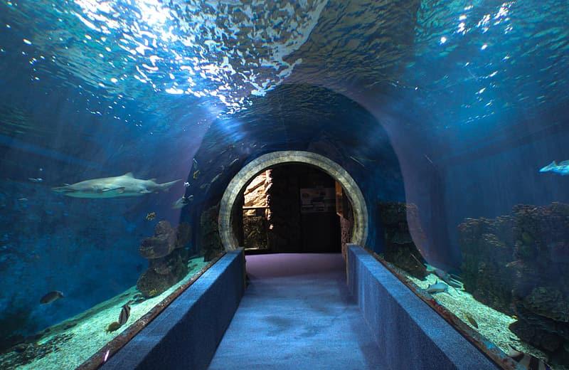 Glass tunnel at New England Aquarium